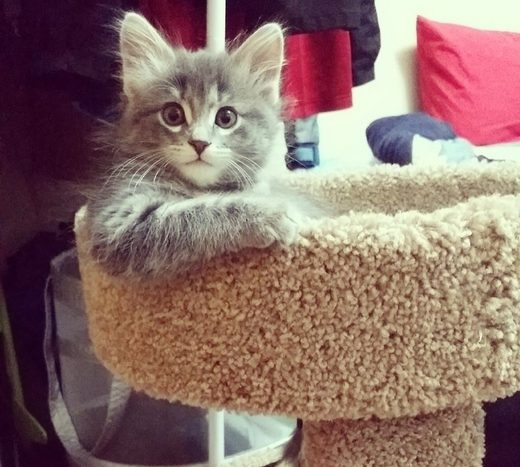 Best Cat Tree Buyers Guide