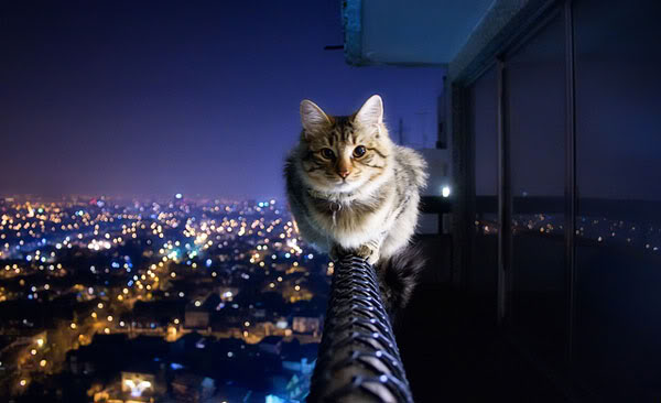 Fearless Kitty
