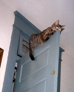 Door Kitty