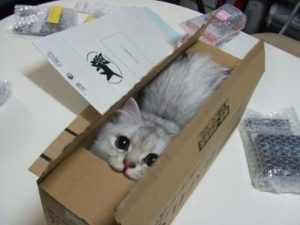cat in a box