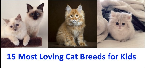 15 Most Loving Cat Breeds For Kids
