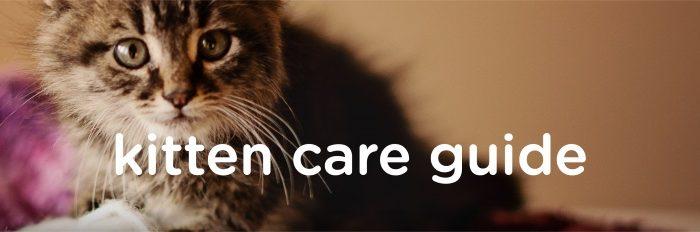 kitten-care-guide
