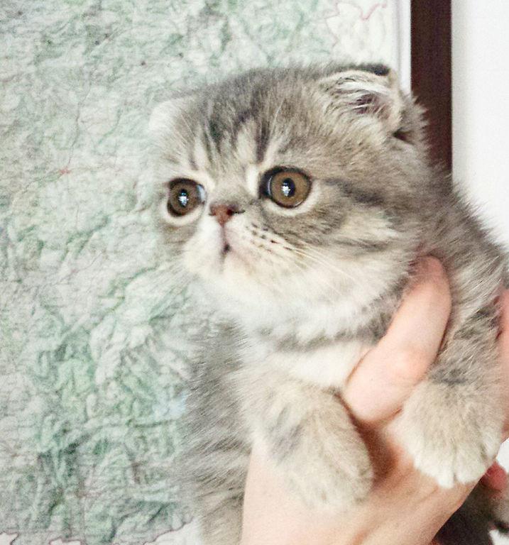 Foldex-Cat
